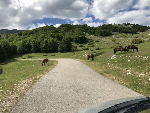 Wyprawa Montenegro 2017 - Dobrilovina, Žabljak, Trsa, Dobra Voda, Dobrota, Perast, Kotor, Ljesevici, Budva - zdjęcie 25