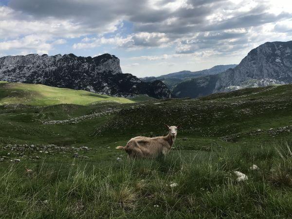Wyprawa Montenegro 2017 - Dobrilovina, Žabljak, Trsa, Dobra Voda, Dobrota, Perast, Kotor, Ljesevici, Budva - zdjęcie 46