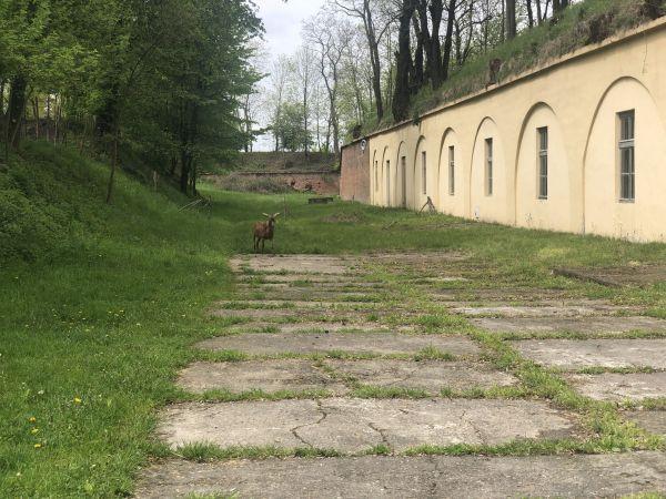 Wyprawa Bieszczady na weekend - Maj 2019 - zdjęcie 32