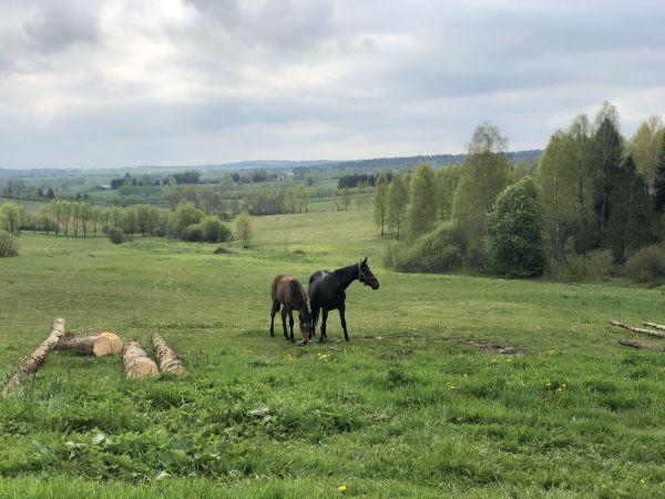 Wyprawa Bieszczady na weekend - Maj 2019 - zdjęcie 136